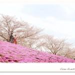 13sakura_y19