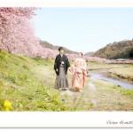 見渡す限り満開の河津桜 和装婚礼前撮り